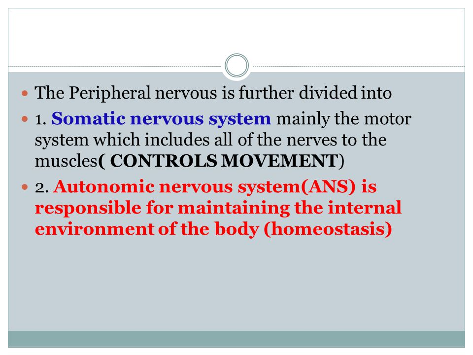 What are the actions of the parasympathetic system.
