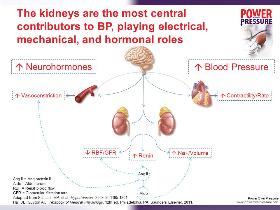 The kidneys are the most central contributors to BP, playing electrical, mechanical, and hormonal roles Ang II = Angiotensin II.