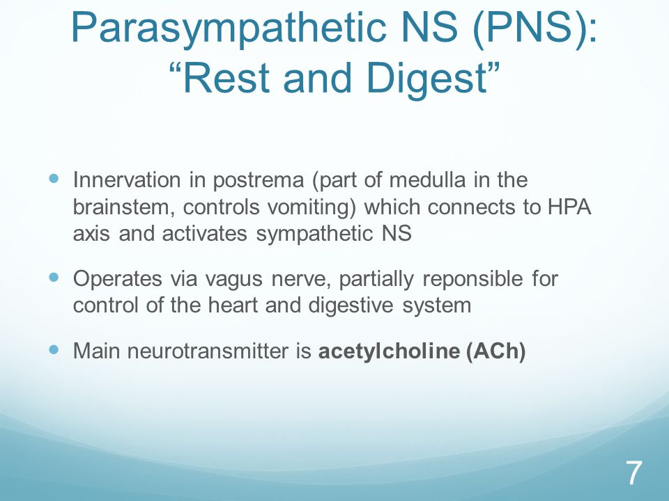 Parasympathetic NS (PNS): Rest and Digest Innervation in postrema (part of medulla in the brainstem, controls vomiting) which connects to HPA axis and activates sympathetic NS Operates via vagus nerve, partially reponsible for control of the heart and digestive system Main neurotransmitter is acetylcholine (ACh) 7