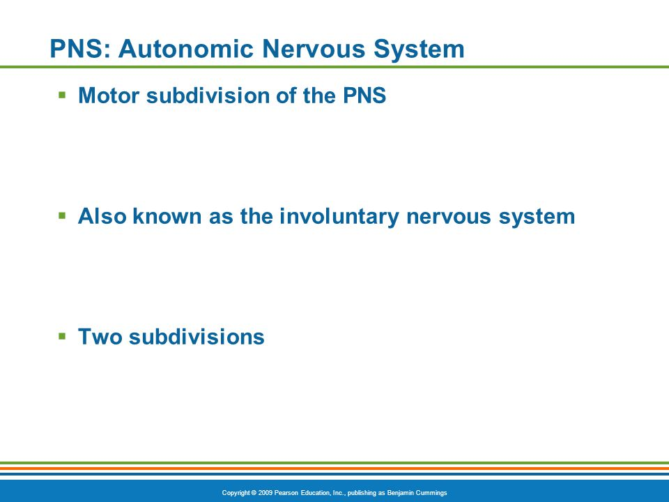 Copyright © 2009 Pearson Education, Inc., publishing as Benjamin Cummings PNS: Autonomic Nervous System  Motor subdivision of the PNS  Also known as
