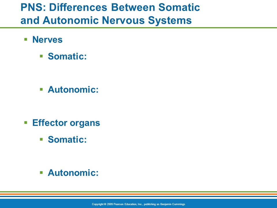 Copyright © 2009 Pearson Education, Inc., publishing as Benjamin Cummings PNS: Differences Between Somatic and Autonomic Nervous Systems  Nerves  So