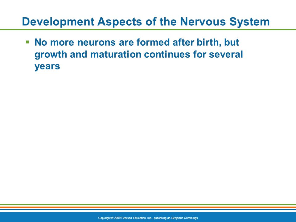 Copyright © 2009 Pearson Education, Inc., publishing as Benjamin Cummings Development Aspects of the Nervous System  No more neurons are formed after