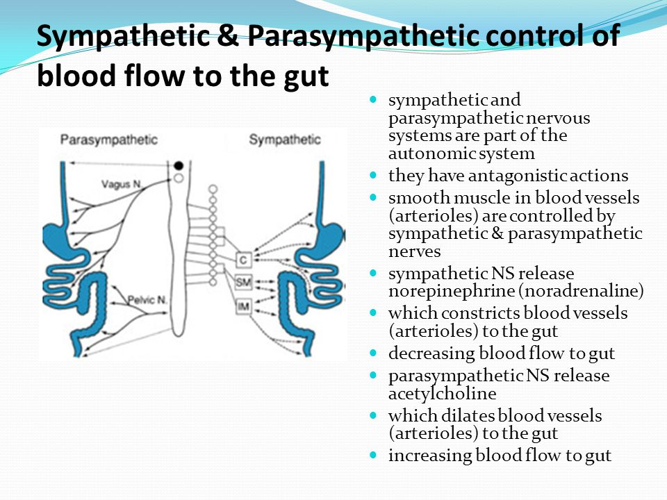 Sympathetic & Parasympathetic control of blood flow to the gut sympathetic and parasympathetic nervous systems are part of the autonomic system they have antagonistic actions smooth muscle in blood vessels (arterioles) are controlled by sympathetic & parasympathetic nerves sympathetic NS release norepinephrine (noradrenaline) which constricts blood vessels (arterioles) to the gut decreasing blood flow to gut parasympathetic NS release acetylcholine which dilates blood vessels (arterioles) to the gut increasing blood flow to gut