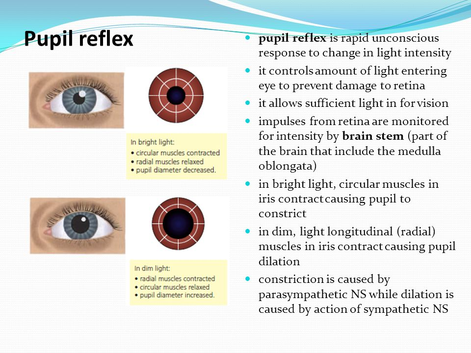 Pupil reflex pupil reflex is rapid unconscious response to change in light intensity it controls amount of light entering eye to prevent damage to retina it allows sufficient light in for vision impulses from retina are monitored for intensity by brain stem (part of the brain that include the medulla oblongata) in bright light, circular muscles in iris contract causing pupil to constrict in dim, light longitudinal (radial) muscles in iris contract causing pupil dilation constriction is caused by parasympathetic NS while dilation is caused by action of sympathetic NS