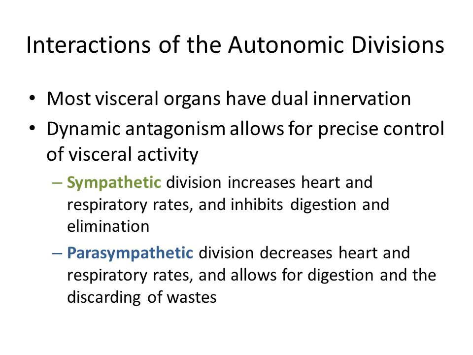Interactions of the Autonomic Divisions Most visceral organs have dual innervation Dynamic antagonism allows for precise control of visceral activity