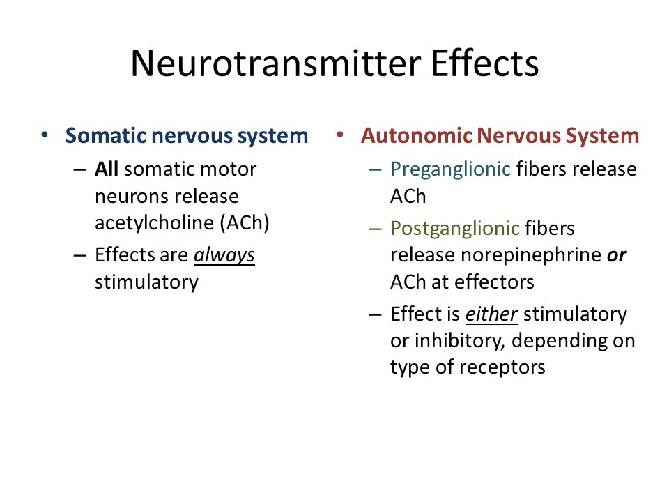Neurotransmitter Effects Somatic nervous system – All somatic motor neurons release acetylcholine (ACh) – Effects are always stimulatory Autonomic Ner