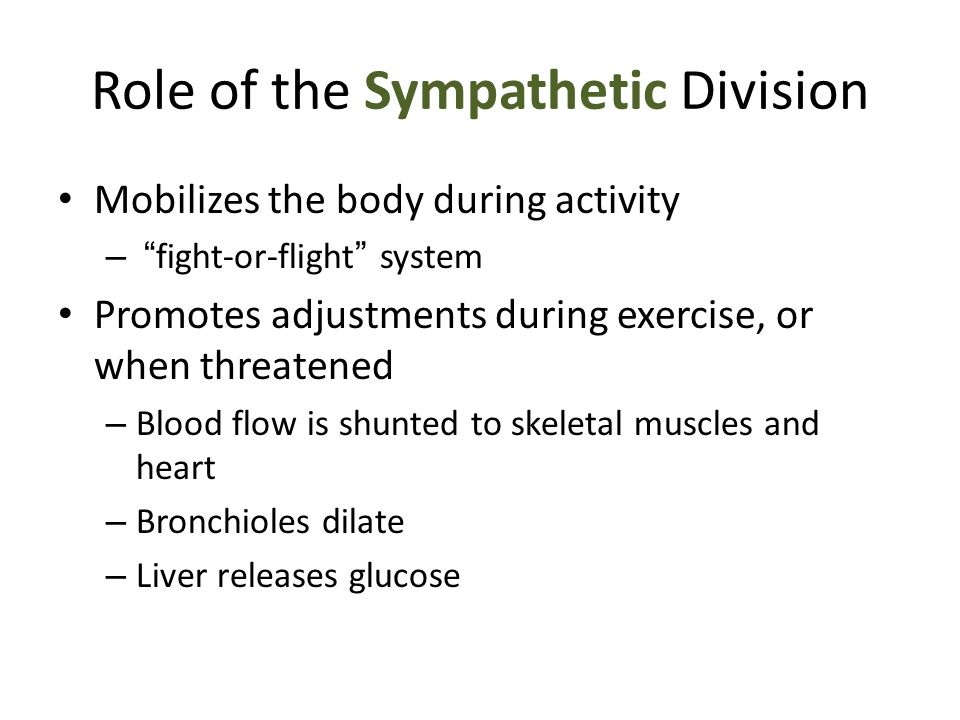 "Role of the Sympathetic Division Mobilizes the body during activity – "" fight-or-flight "" system Promotes adjustments during exercise, or when threate"