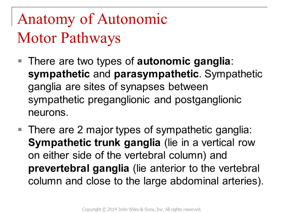  There are two types of autonomic ganglia: sympathetic and parasympathetic.