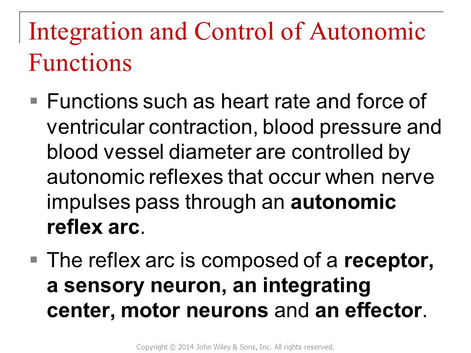  Functions such as heart rate and force of ventricular contraction, blood pressure and blood vessel diameter are controlled by autonomic reflexes that occur when nerve impulses pass through an autonomic reflex arc.