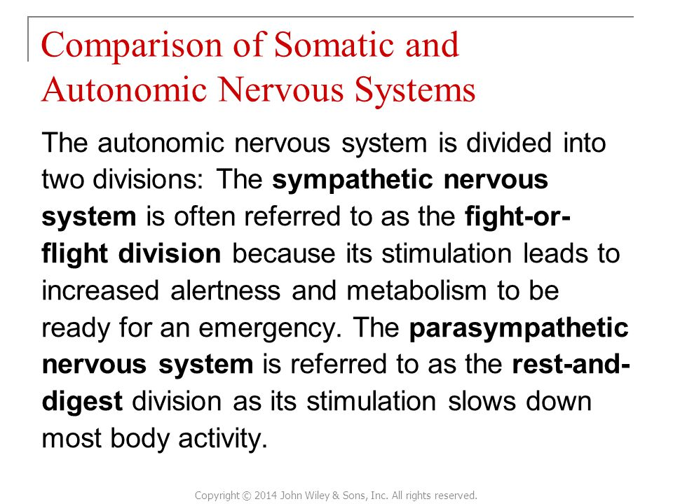 The autonomic nervous system is divided into two divisions: The sympathetic nervous system is often referred to as the fight-or- flight division because its stimulation leads to increased alertness and metabolism to be ready for an emergency.