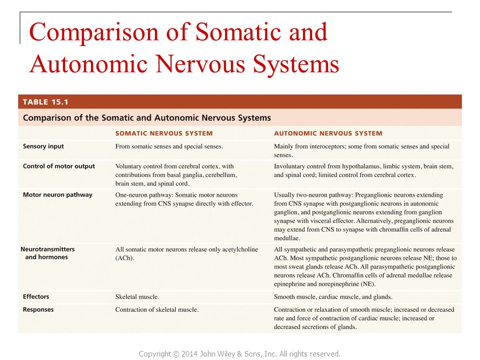 Comparison of Somatic and Autonomic Nervous Systems Copyright © 2014 John Wiley & Sons, Inc.