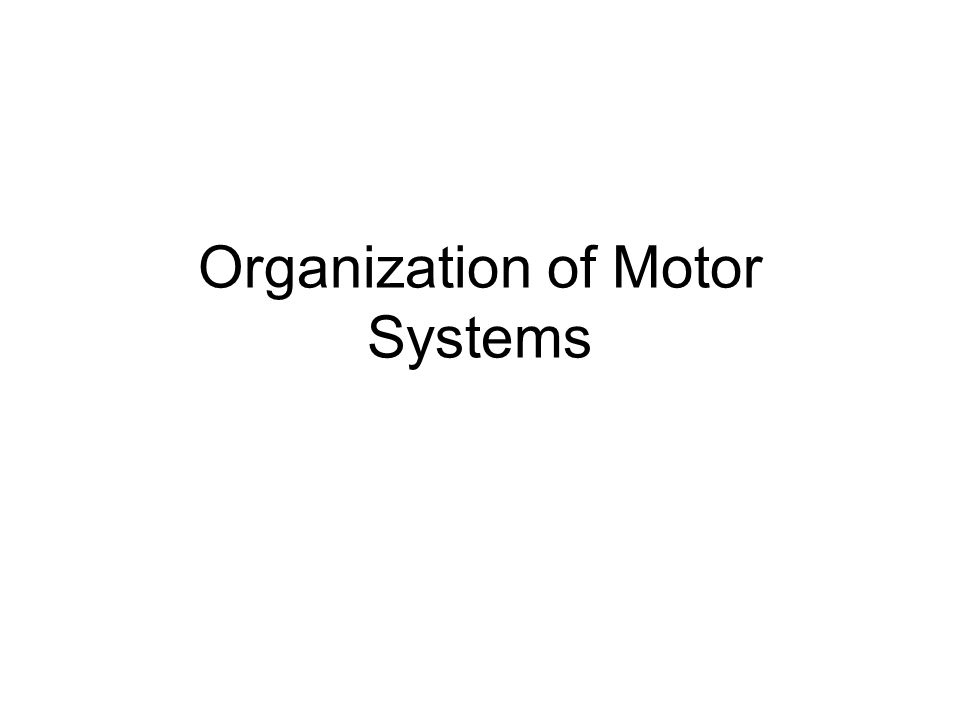 Organization of Motor Systems