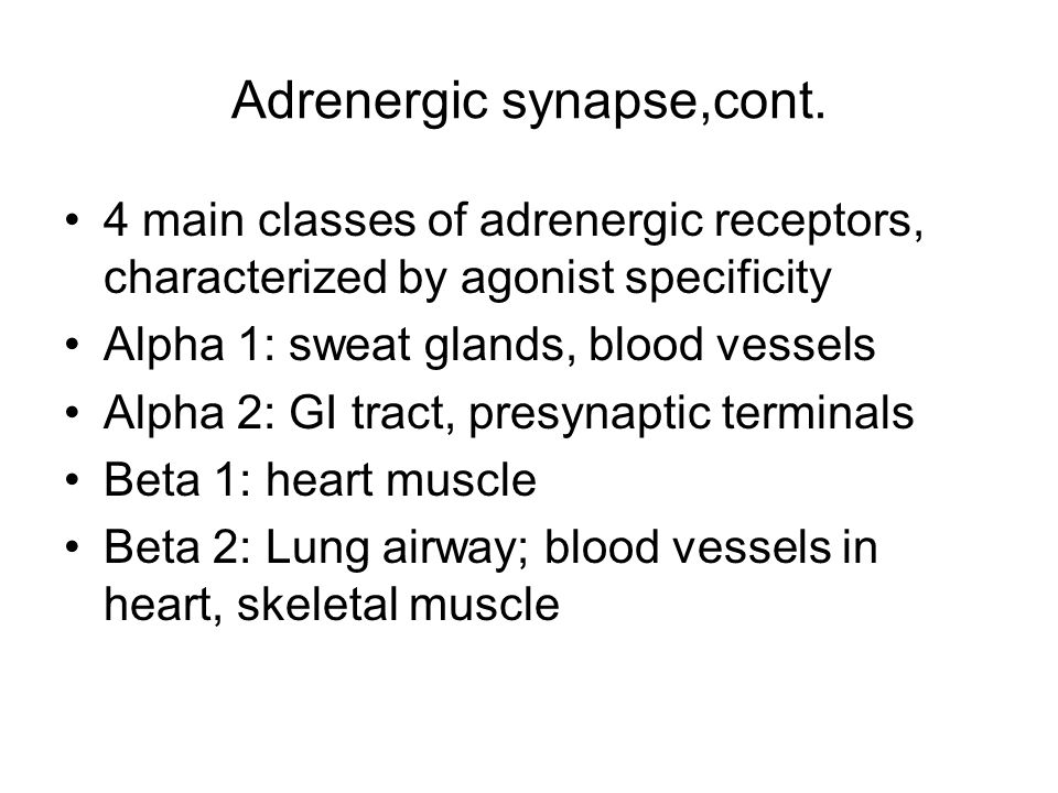 Adrenergic synapse,cont. 4 main classes of adrenergic receptors, characterized by agonist specificity Alpha 1: sweat glands, blood vessels Alpha 2: GI
