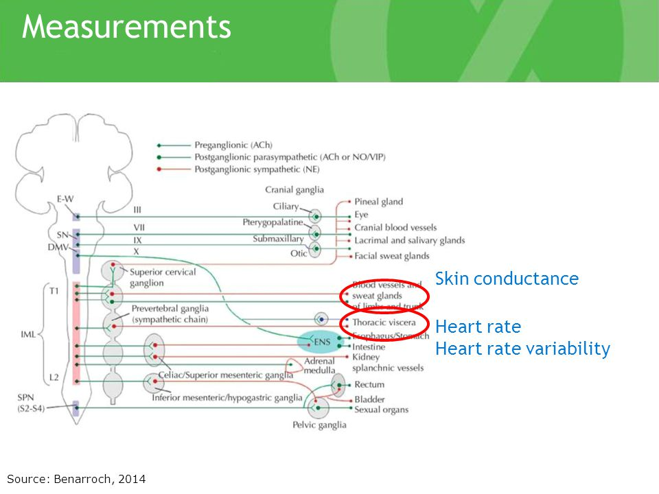 Measurements Source: Benarroch, 2014 Skin conductance Heart rate Heart rate variability