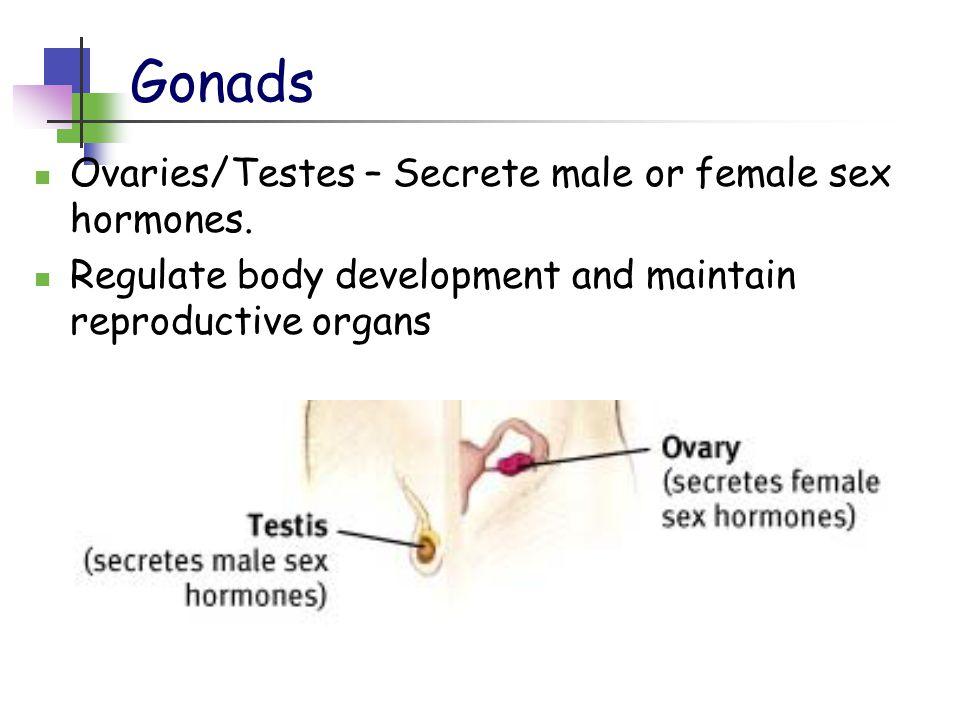 Gonads Ovaries/Testes – Secrete male or female sex hormones. Regulate body development and maintain reproductive organs