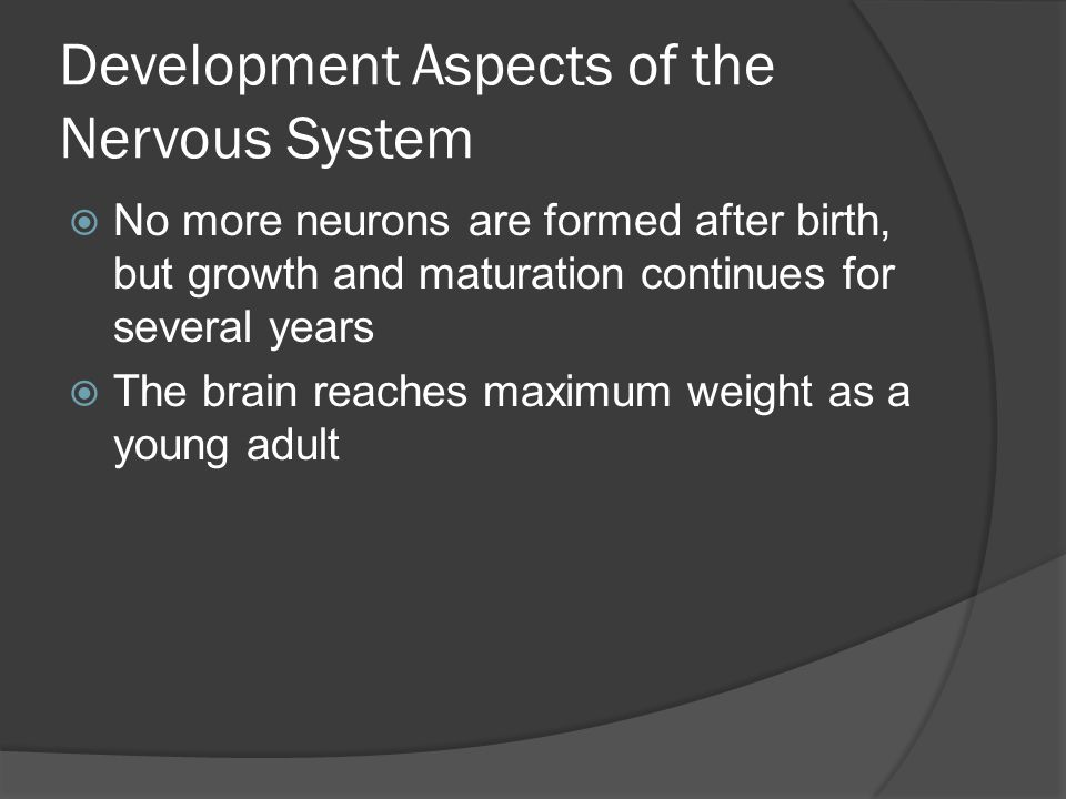 Development Aspects of the Nervous System  No more neurons are formed after birth, but growth and maturation continues for several years  The brain reaches maximum weight as a young adult