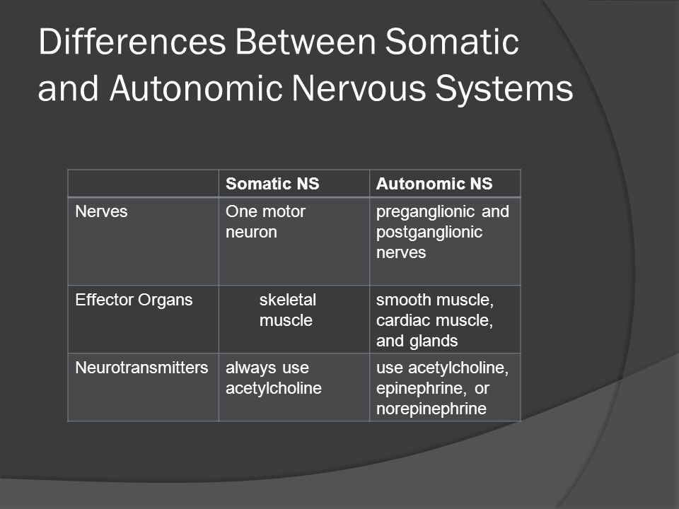 Differences Between Somatic and Autonomic Nervous Systems Somatic NSAutonomic NS NervesOne motor neuron preganglionic and postganglionic nerves Effector Organsskeletal muscle smooth muscle, cardiac muscle, and glands Neurotransmittersalways use acetylcholine use acetylcholine, epinephrine, or norepinephrine