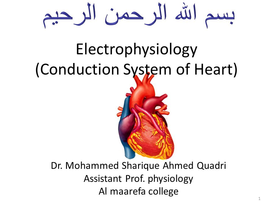 Electrophysiology (Conduction System of Heart) Dr. Mohammed Sharique Ahmed Quadri Assistant Prof. physiology Al maarefa college 1