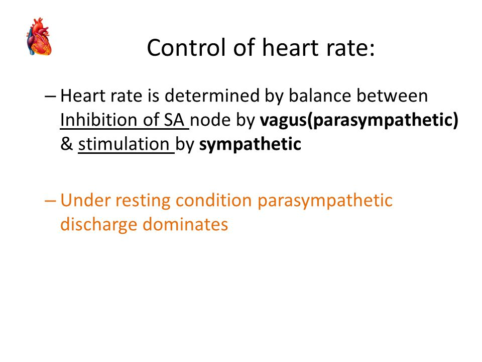 – Heart rate is determined by balance between Inhibition of SA node by vagus(parasympathetic) & stimulation by sympathetic – Under resting condition p