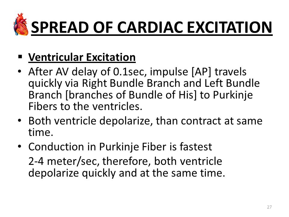 SPREAD OF CARDIAC EXCITATION  Ventricular Excitation After AV delay of 0.1sec, impulse [AP] travels quickly via Right Bundle Branch and Left Bundle B