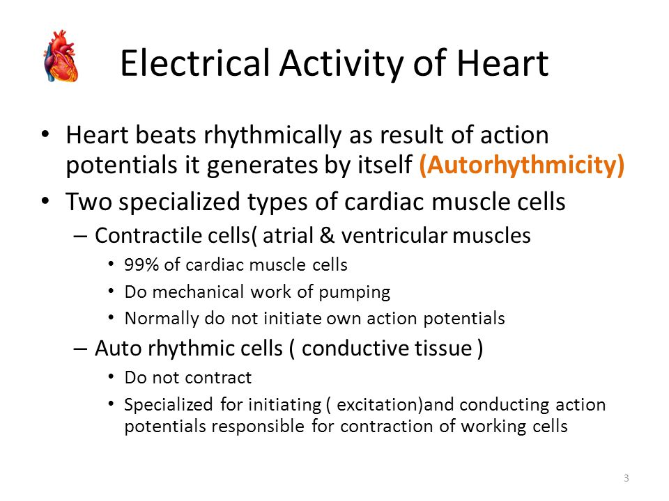 Electrical Activity of Heart Heart beats rhythmically as result of action potentials it generates by itself (Autorhythmicity) Two specialized types of