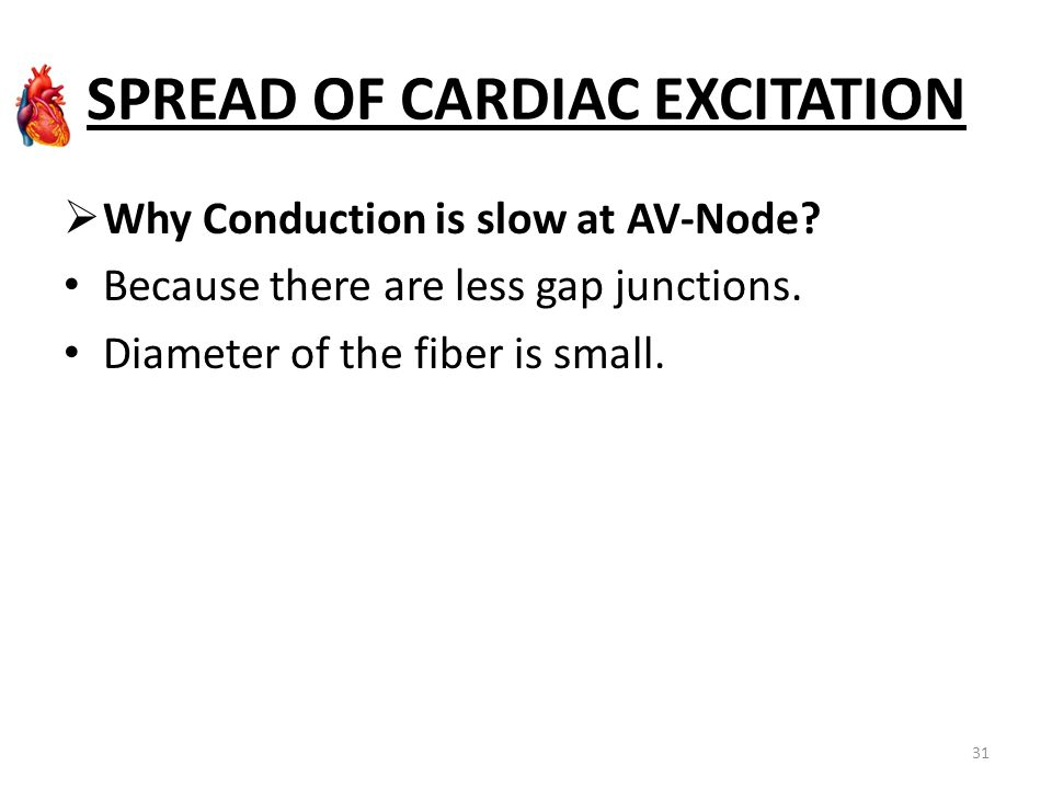 SPREAD OF CARDIAC EXCITATION  Why Conduction is slow at AV-Node? Because there are less gap junctions. Diameter of the fiber is small. 31