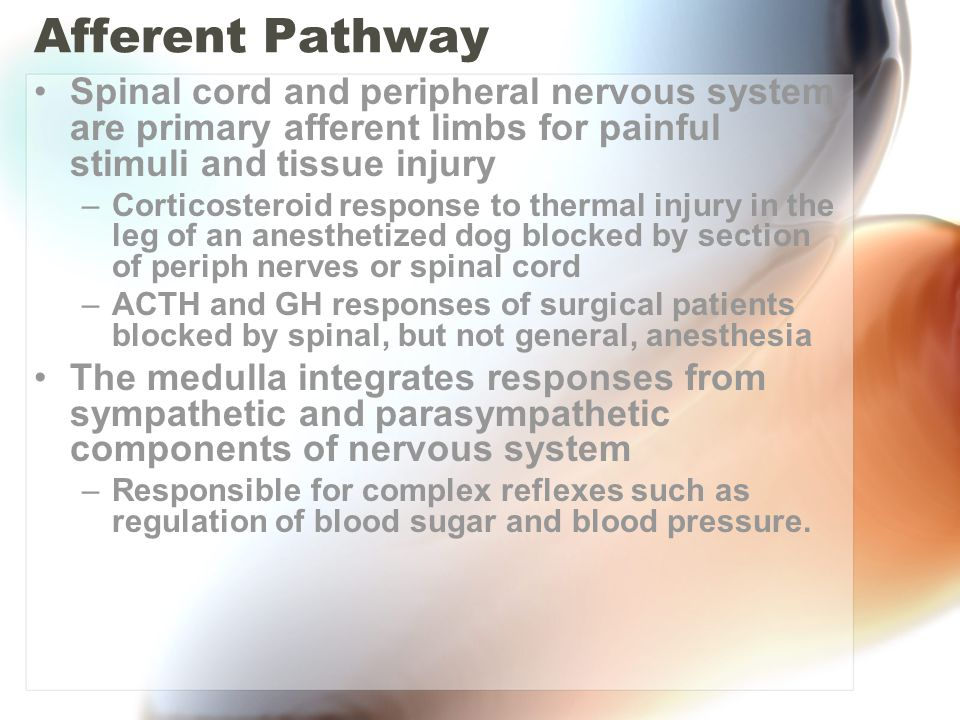 Afferent Pathway Spinal cord and peripheral nervous system are primary afferent limbs for painful stimuli and tissue injury –Corticosteroid response to thermal injury in the leg of an anesthetized dog blocked by section of periph nerves or spinal cord –ACTH and GH responses of surgical patients blocked by spinal, but not general, anesthesia The medulla integrates responses from sympathetic and parasympathetic components of nervous system –Responsible for complex reflexes such as regulation of blood sugar and blood pressure.