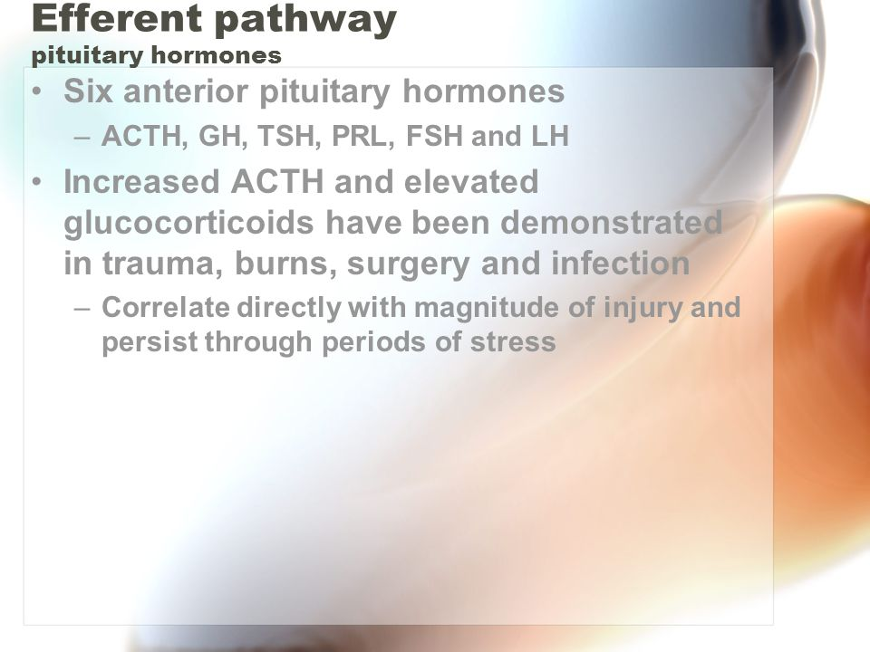 Efferent pathway pituitary hormones Six anterior pituitary hormones –ACTH, GH, TSH, PRL, FSH and LH Increased ACTH and elevated glucocorticoids have been demonstrated in trauma, burns, surgery and infection –Correlate directly with magnitude of injury and persist through periods of stress