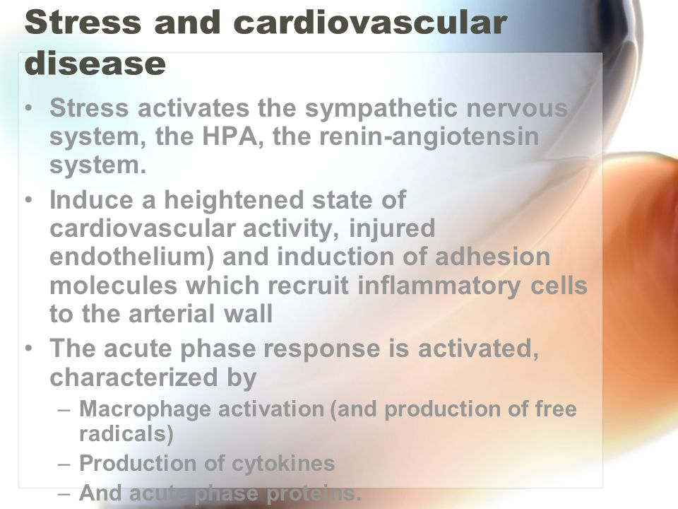 Stress and cardiovascular disease Stress activates the sympathetic nervous system, the HPA, the renin-angiotensin system.