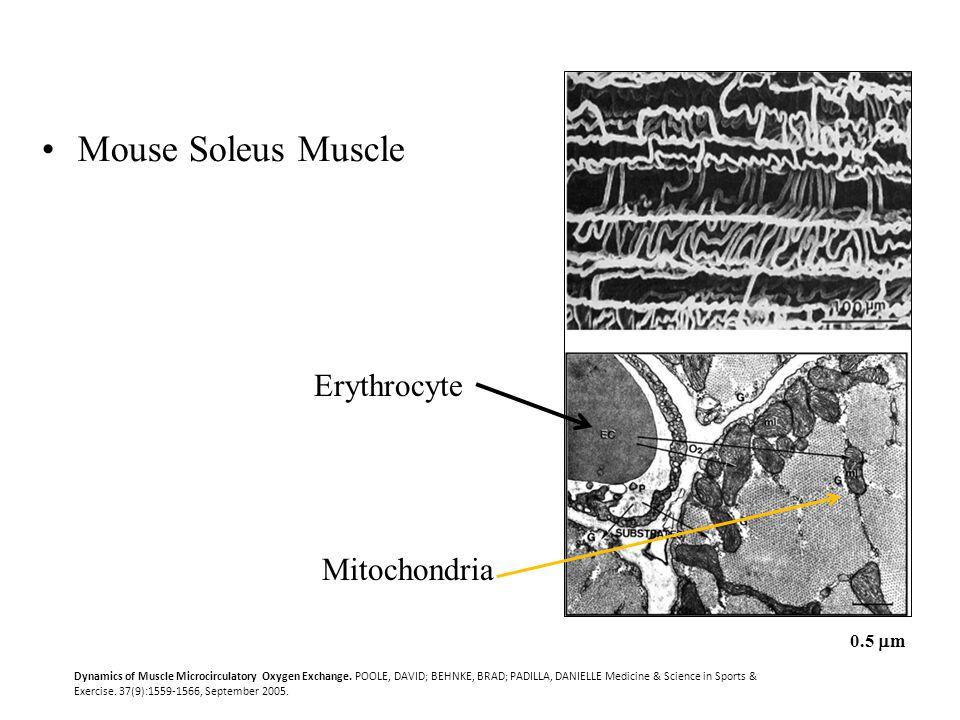 Dynamics of Muscle Microcirculatory Oxygen Exchange. POOLE, DAVID; BEHNKE, BRAD; PADILLA, DANIELLE Medicine & Science in Sports & Exercise. 37(9):1559