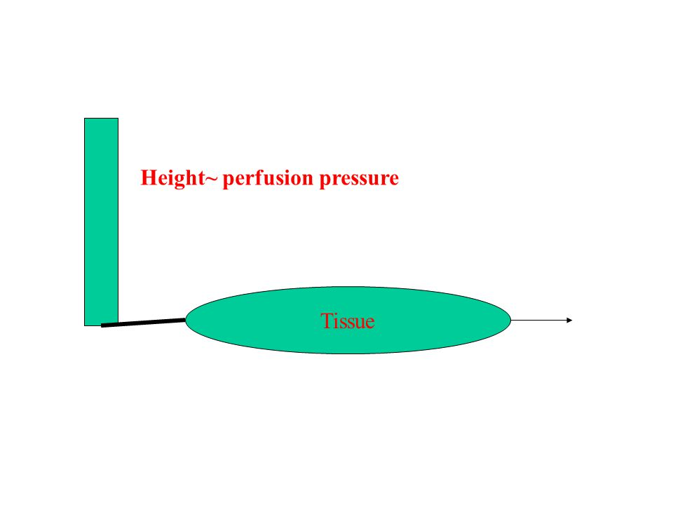 Tissue Height~ perfusion pressure
