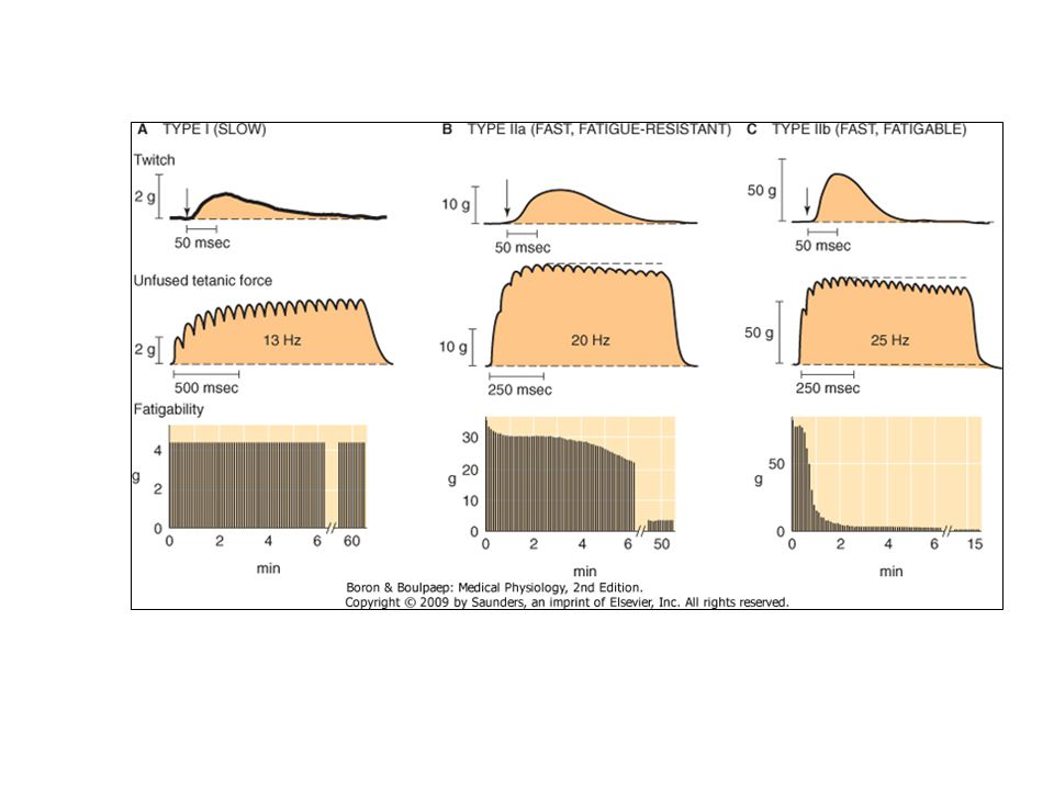 Figure 60-2 A to C, Properties of fiber types (i.e., motor units in gastrocnemius muscle).