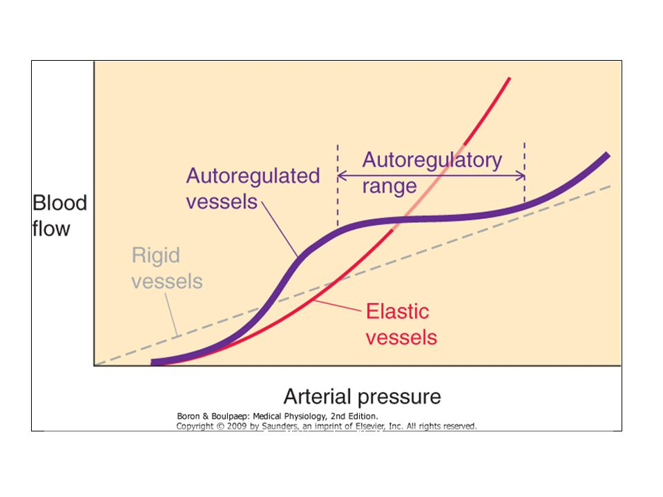 Figure 20-14 Autoregulation of blood flow. Downloaded from: StudentConsult (on 25 February 2010 10:44 PM) © 2005 Elsevier