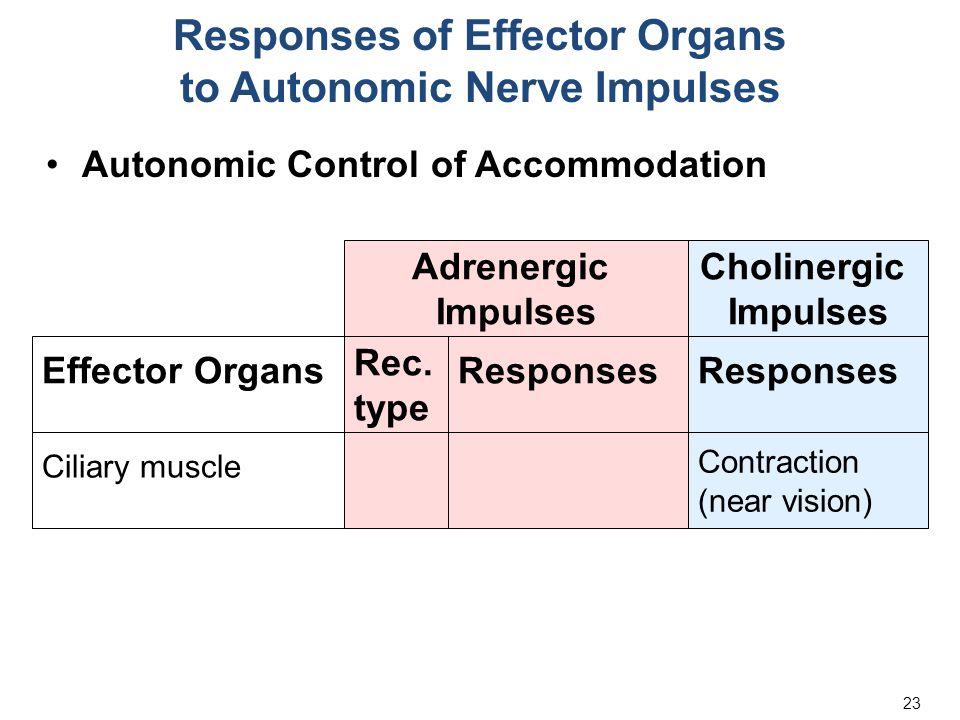 23 Responses of Effector Organs to Autonomic Nerve Impulses Autonomic Control of Accommodation Adrenergic Impulses Cholinergic Impulses Responses Effector Organs Rec.
