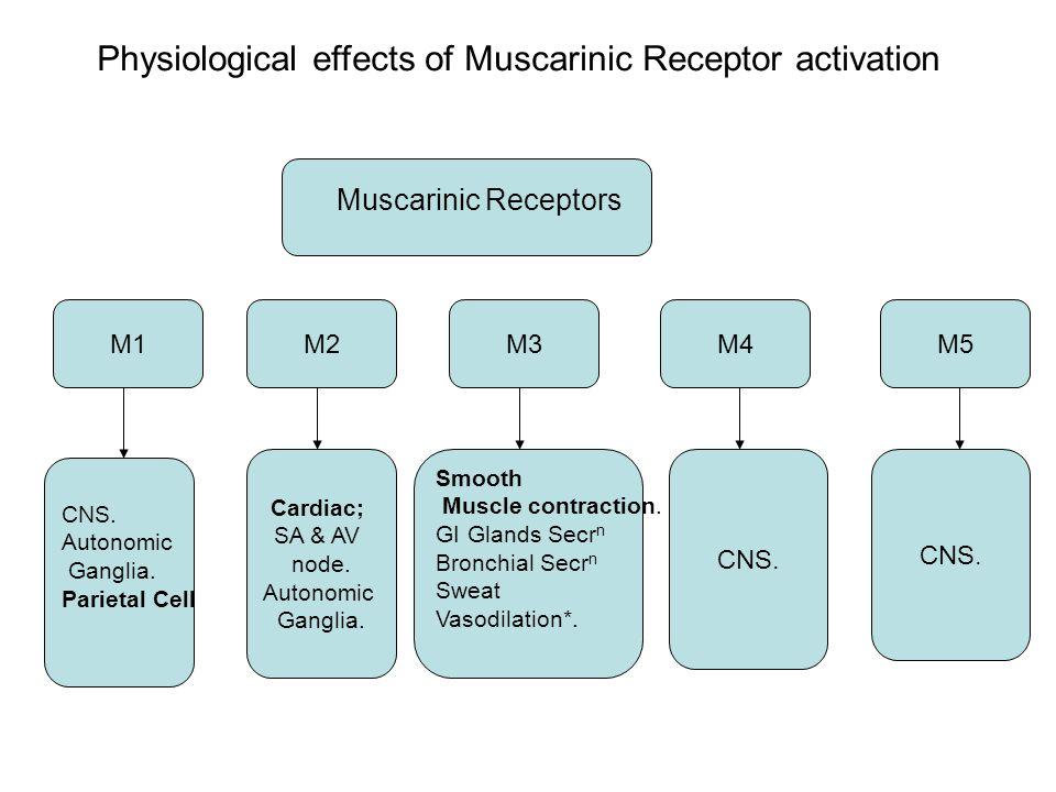 M1M2M3M4M5 Muscarinic Receptors CNS. Autonomic Ganglia.