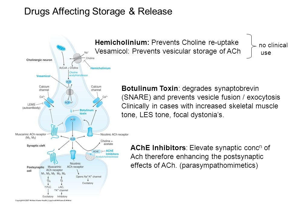 Drugs Affecting Storage & Release Hemicholinium: Prevents Choline re-uptake Vesamicol: Prevents vesicular storage of ACh no clinical use Botulinum Toxin: degrades synaptobrevin (SNARE) and prevents vesicle fusion / exocytosis Clinically in cases with increased skeletal muscle tone, LES tone, focal dystonia's.