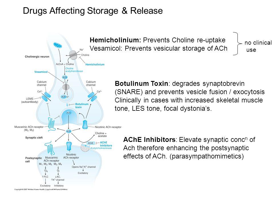 Drugs Affecting Storage & Release Hemicholinium: Prevents Choline re-uptake Vesamicol: Prevents vesicular storage of ACh no clinical use Botulinum Tox