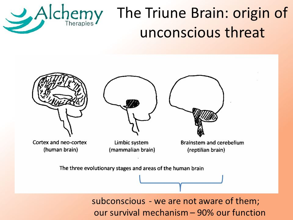 The Triune Brain: origin of unconscious threat subconscious - we are not aware of them; our survival mechanism – 90% our function