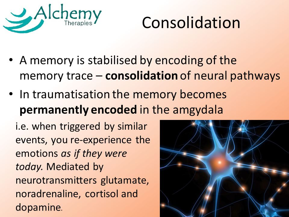 Consolidation A memory is stabilised by encoding of the memory trace – consolidation of neural pathways In traumatisation the memory becomes permanently encoded in the amgydala i.e.
