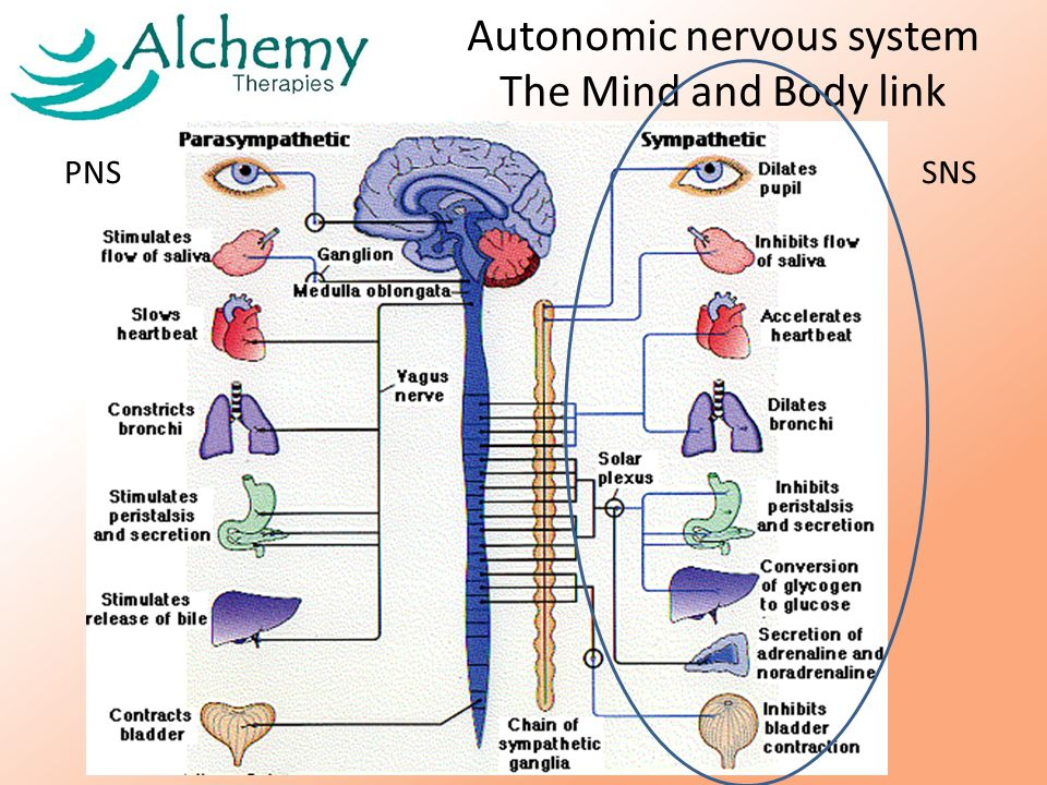 The Stress Response – activates the HPA axis of the sympathetic nervous system – activate adrenals and thyroid A stressor is anything that takes the body out of homeostasis