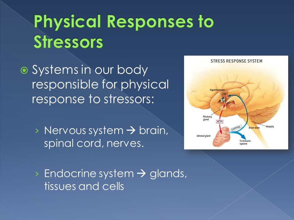  Systems in our body responsible for physical response to stressors: › Nervous system  brain, spinal cord, nerves. › Endocrine system  glands, tiss