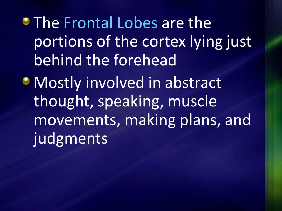 The Frontal Lobes are the portions of the cortex lying just behind the forehead Mostly involved in abstract thought, speaking, muscle movements, makin
