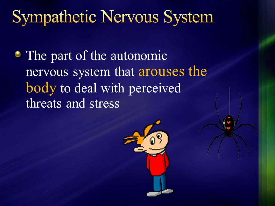arouses the body The part of the autonomic nervous system that arouses the body to deal with perceived threats and stress