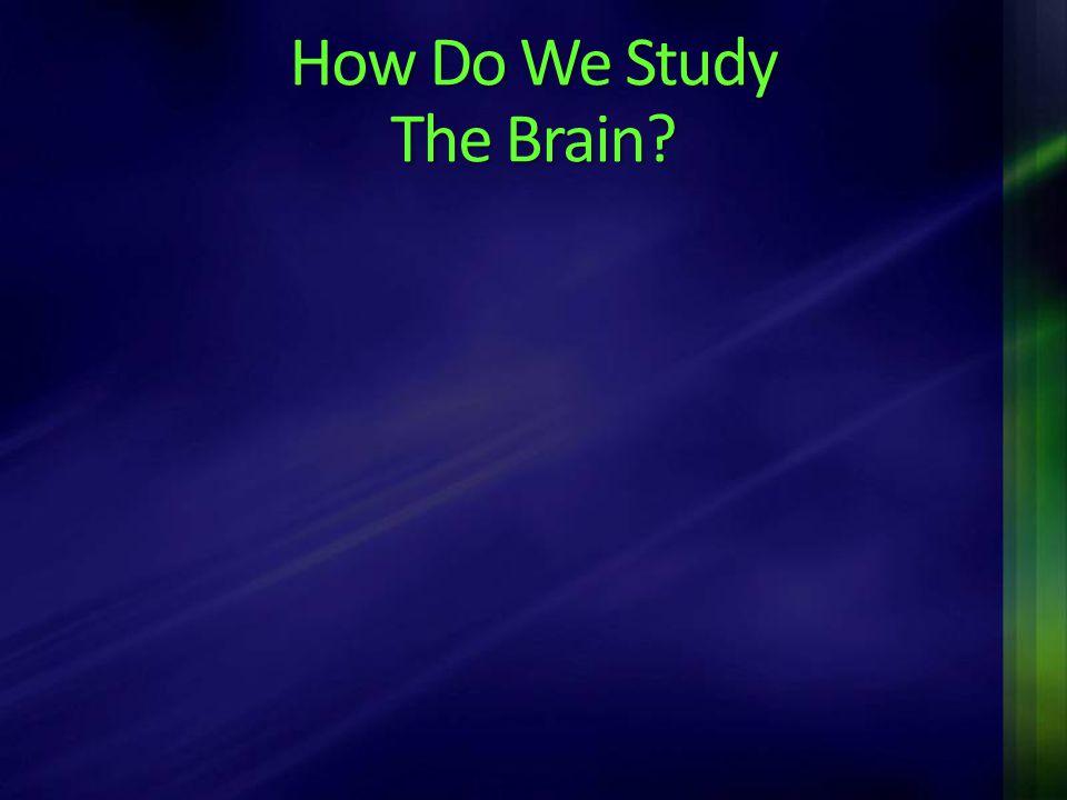 How Do We Study The Brain?