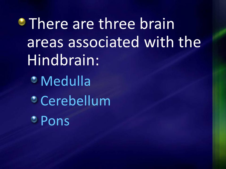 There are three brain areas associated with the Hindbrain: Medulla Cerebellum Pons