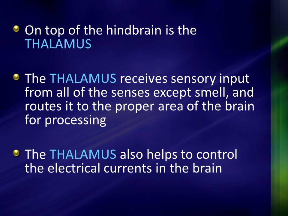 On top of the hindbrain is the THALAMUS The THALAMUS receives sensory input from all of the senses except smell, and routes it to the proper area of t