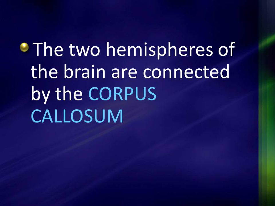 The two hemispheres of the brain are connected by the CORPUS CALLOSUM