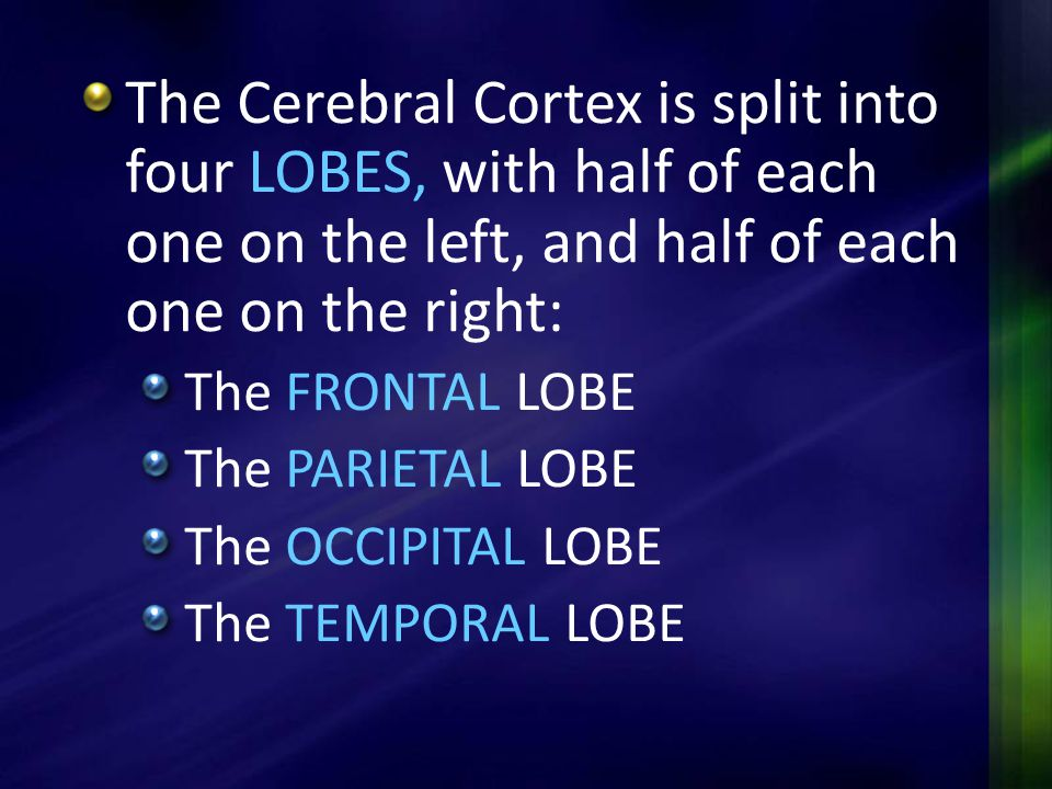 The Cerebral Cortex is split into four LOBES, with half of each one on the left, and half of each one on the right: The FRONTAL LOBE The PARIETAL LOBE