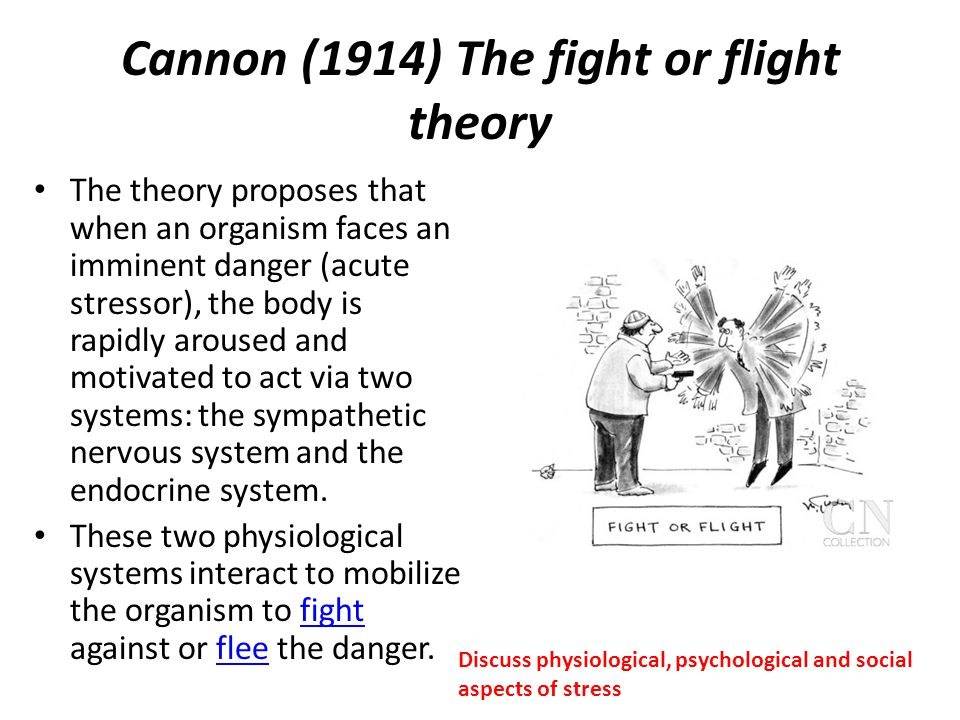 Cannon (1914) The fight or flight theory The theory proposes that when an organism faces an imminent danger (acute stressor), the body is rapidly arou