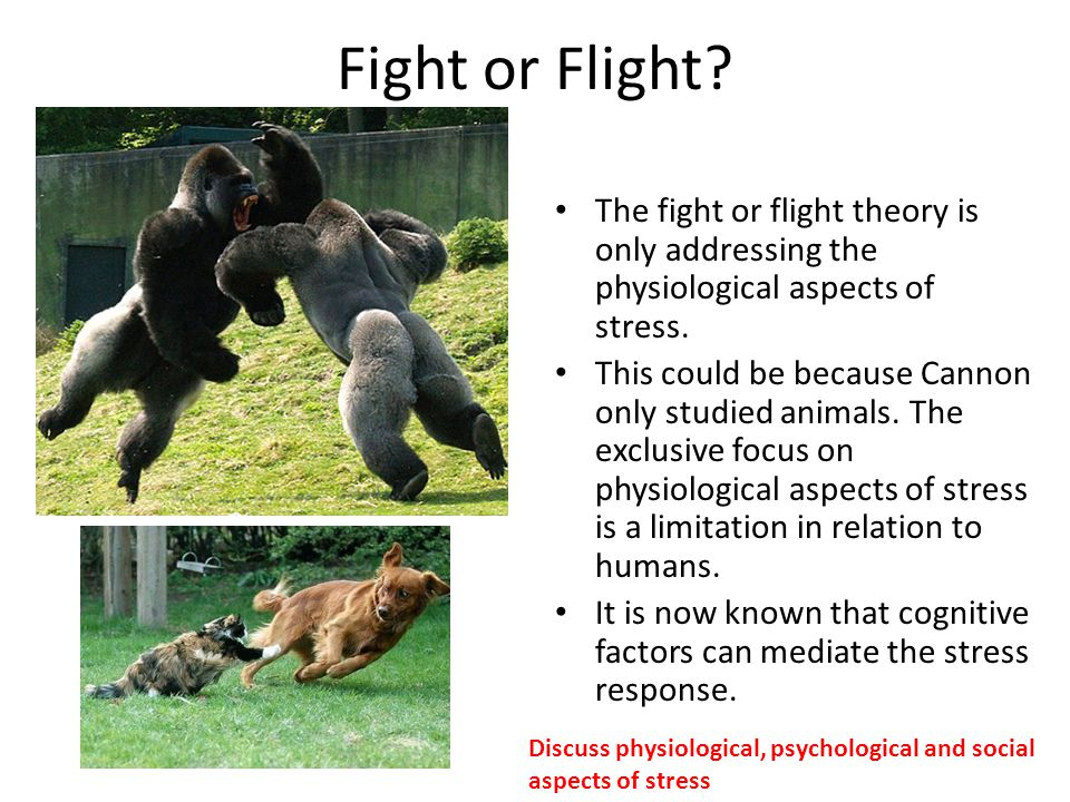 Fight or Flight? The fight or flight theory is only addressing the physiological aspects of stress. This could be because Cannon only studied animals.